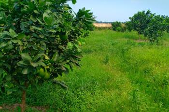 Cần bán lô đất 7000m2, cách ngã tư Lục Quân 1km, phù hợp làm trang trại,..., LH Mrs Hiền 0961733396