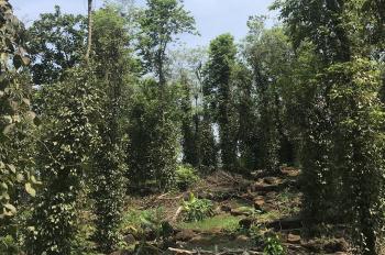 Bán đất vườn trồng tiêu, xen canh sầu riêng và bưởi, 110tr/1000m2, 1,4ha Tân Phú, Đồng Nai