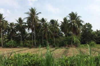Cho thuê đất nông nghiệp 5.000m2, Xã Phú Kiết, Chơ Gạo - A Phong 0909 969 726 - 15tr/năm