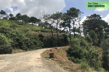 Bán 1000m2 đất NN mặt tiền hẻm trung tâm P8, Đà Lạt
