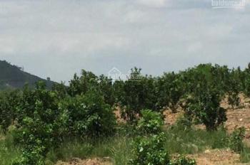 Nhà vườn có nhà Khánh Vĩnh, đã có thu hoạch từ cây trong vườn