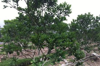 Cần bán gấp trang trại gần dự án Cienco 5 Thanh Hà chỉ 900 nghìn/m2