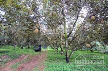 Bán 5 hecta trồng cây ăn trái xã An Điền, An Tây, Bến Cát, giá 300 ngàn/m2, đang kẹt tiền bán gấp