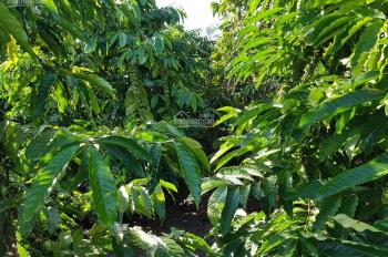 Bán gấp 2.4 ha đất vườn cafe, trung tâm thôn 9, Tân Thanh, Lâm Hà, Lâm Đồng