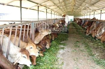 Cần bán trang trại ở Hàm Kiệm, Bình Thuận, giá bán 210 tỷ, diện tích 107 ha, LH 0938909469