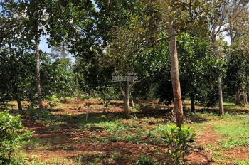Chính chủ bán nhà đất khu vườn cây ăn trái lâu năm thị Xã Phú Mỹ, Bà Rịa - Vũng Tàu. LH 0909323552