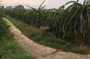 Chính chủ kẹt tiền bán gấp 1350m2 đất thanh long, Phú Long, Hàm Thuận Bắc, Bình Thuận
