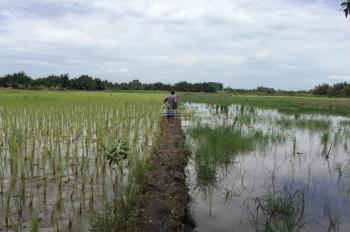 Nhận ký gửi mua bán đất ruộng,lúa,công ,vườn các Xã Phú Hữu,Phú Đông Huyện Nhơn Trạch,Đồng Nai