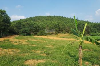 Cần bán 18000m2 đất rừng ẩn xuất tại Yên Trung, Thạch Thất, Hà Nội