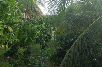 Chính chủ bán gấp 1300m2 đất vườn, mặt tiền, giá 5tr500/m2, Chợ Mới, An Giang