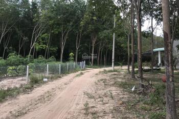 Bán 6 sào đất nuôi yến ở hồ Dầu Tiếng ngay Minh Hòa - Dầu Tiếng
