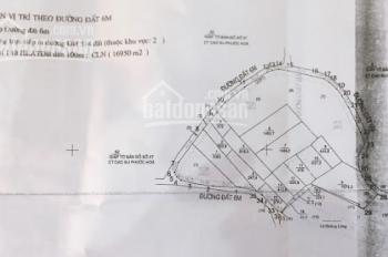Bán đất đang trồng cây cao su 19000m2 ở Phước Hòa, Phú Giáo, Bình Dương, 6 tỷ/mẫu