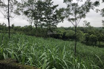 Nhượng 1700m2 đất trang trại nhà vườn xã Tản Lĩnh, cạnh cổng vườn quốc gia Ba Vì