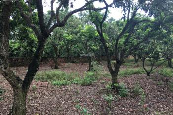 Bán đất giá rẻ chỉ 270 triệu/sào sổ đỏ chính chủ đất nở hậu tại Yên Bài, Ba Vì, Hà Nội