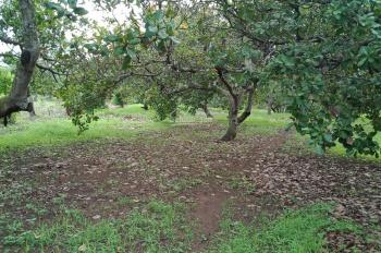 Cần bán đất Xuân Đông 6,6 sào, đường bao quanh đất, liên hệ 0984010493
