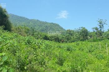 Cơ hội sở hữu ngay 6000m2 đất nhà vườn tại thôn Đồng Dâu, Tiến Xuân, Thạch Thất, Hà Nội