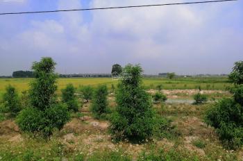 0961980322! Bán đất nông nghiệp đất xen kẹt 5000m2 mặt Võ Nguyên Giáp, Đông Anh, Hà Nội