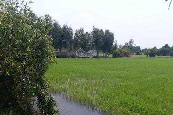 Bán đất huyện Đức Hòa, 6100m2 xã Tân Phú, cách TL 830 300m, giá 2 tỷ 100 triệu