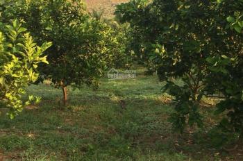 Bán trang trại rộng gần 8 hecta, cách thành phố Nha Trang chỉ 18 km. LH 0845707668