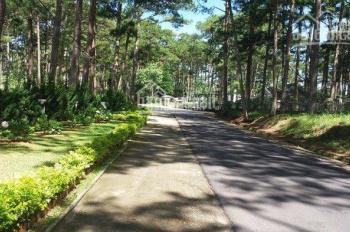 Chính chủ cần bán 2 căn nhà trung tâm TP Đà Lạt, view đẹp, giá tốt