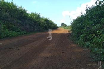 Bán đất rẫy , đất cao su, làm trang trại giá rẻ nhất Lộc Ninh,Bình Phước