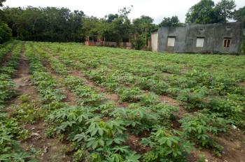 Bán gấp 2,3 sào đất  ấp 3 xã Xuân Bắc, Xuân Lộc Đồng Nai, 650tr, mặt tiền 70m