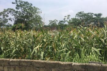Cần bán gấp 448 m2 đất thổ cư tại Yên Bài, Ba Vì, Hà Nội