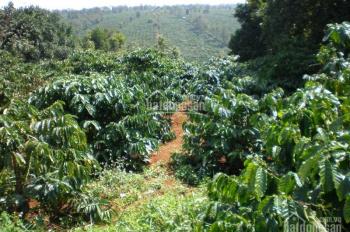 Bán đất vườn thích hợp là khu nghỉ dưỡng tại xã Đambri, Bảo Lộc, Lâm Đồng