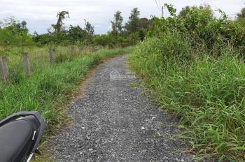 Cần bán gấp lô đất vườn đang trồng xoài Cát Hòa Lộc, sổ hồng riêng, đường xã Mỹ Lộc, Cần Giuộc