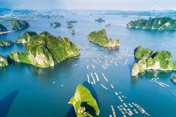 Bán nhanh lô đất biệt thự Tuần Châu giá 6 triệu/m2, địa thế bằng phẳng, phong thủy đẹp