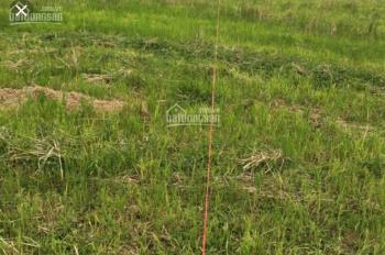 Thanh lí lô đất 555m2 giá siêu rẻ Minh Phú, Sóc Sơn vuông cạnh