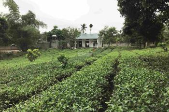 Bán đất thôn chóng Yên Bài, sổ đỏ chính chủ, đường vào bê tông lớn, đất thoáng và có tầm nhìn tốt