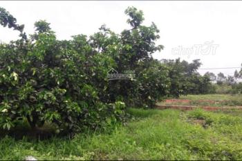 Chính chủ bán trang trại vườn cây trái thu nhập 1,5 tỷ/năm, DT 4.5ha. Giá 3,8 tỷ TL