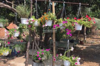 Cho thuê nhà sân vườn 1300m2, nhà cấp 4 diện tích 170m2, đường Hồ Văn Cống, phường Tương Bình Hiệp