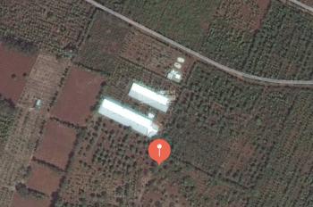 Bán rẫy 1,1 hecta giá 2 tỷ, địa chỉ thôn 1, xã Hòa Thuận, Buôn Ma Thuột. LH: 0932467447