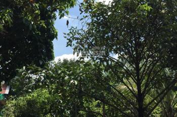 Bán vườn trái cây đang thu hoạch 2 mặt tiền rạch Sông Lu, Xã Trung An, Củ Chi