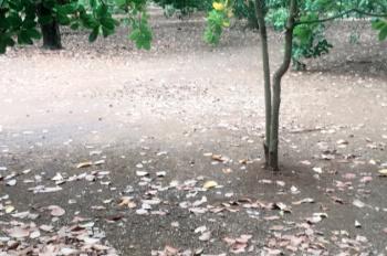Bán đất vườn tại xã Thuận Lợi, huyện Đồng Phú, tỉnh Bình Phước