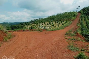 Bán đất trồng cây tươi tốt, vị trí đất đẹp, thu hút thuộc Đắk Ha, Đắk Nông