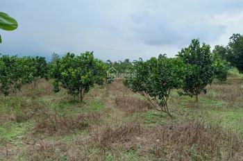 Bán vườn trái cây 17000m2 (1,7ha) view suối đẹp ở xã Đạ Ploa, Lâm Đồng, giá 5,2 tỷ LH: 0799779289