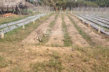 Bán đất chuyên dùng gần khu dự án JAM Cồn Khương, Cần Thơ giá rẻ 60 triệu/m2