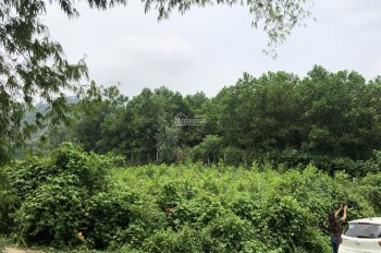 Bán đất thổ cư trang trại nhà vườn DT 15 sào tại Phú Mãn, Quốc Oai, HN. Giá 270 triệu/sào