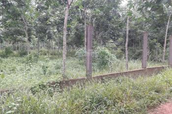 Bán nhanh 3,7 mẫu đất đỏ tại Xuân Tâm, Xuân Lộc, Đồng Nai, giá 5 tỷ