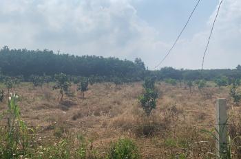 Bán nhanh lô đất xã Suối Cao, Huyện Xuân Lộc Tỉnh Đồng Nai