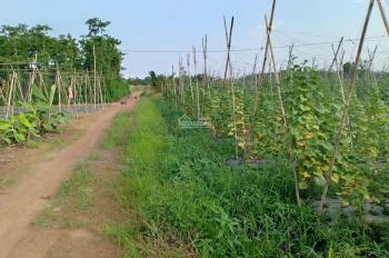 Cần bán đất gấp khu vực lâm san cam mỹ