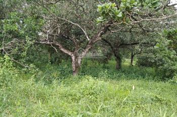 cần bán gấp 2,3 hecta đất điều xã suối cao xuân lộc,Đồng nai liên hệ. 0969943994