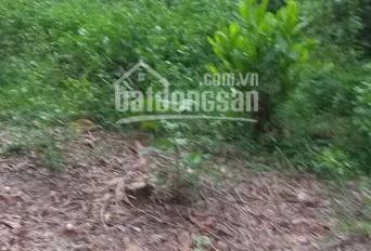 Bán đất Thôn La Gián, Cổ Đông, TX Sơn Tây. DT 900m2 gần sân Golf Đồng Mô, làm sân vườn cực đẹp