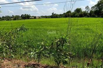 Chính chủ cần bán gấp 1883m2 đất mặt tiền Tỉnh Lộ 830, thuộc xã Hòa Khánh Tây, giáp ranh Tân Phú