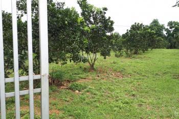 Gia đình tôi cần bán 1560m2 và 2000m2 đất tại thôn Thắng Đầu, xã Hòa Thạch. Liên hệ: 0966.331.159