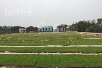 Cần bán 7 suất đất nông nghiệp đã có sổ 50 năm tại Thanh Trì, 0981368838