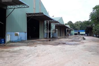 Bán nhà xưởng 13.389m2 (100% SKC) có giấy phép ngành gỗ, phường Thới Hòa, thị xã Bến Cát, BD